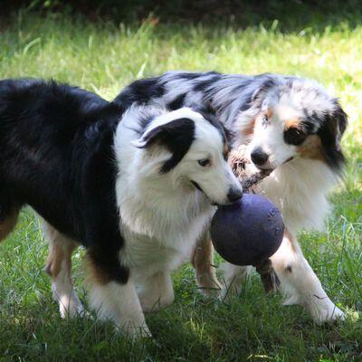 Jolly Pets Jolly Ball Romp-n-Roll 20 cm blå