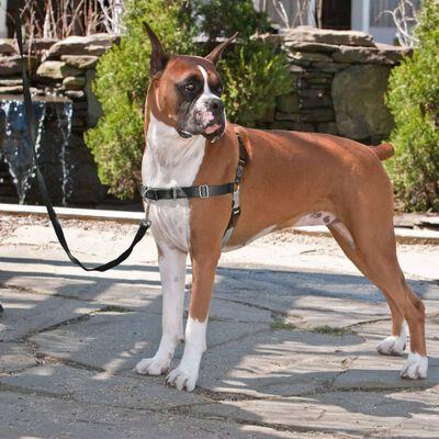 PetSafe hundesele Easy Walk S sort