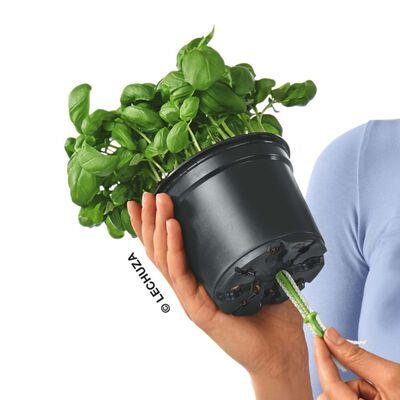 LECHUZA plantekrukke OJO ALL-IN-ONE havblå