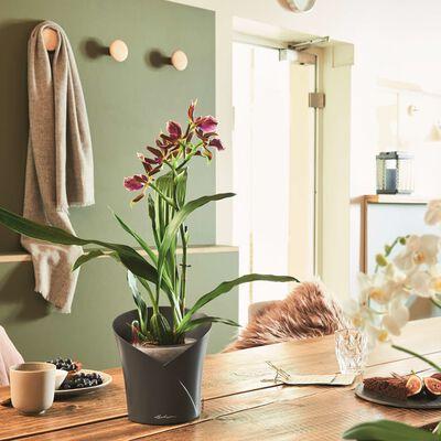 LECHUZA plantekrukke ORCHIDEA ALL-IN-ONE mat skifergrå